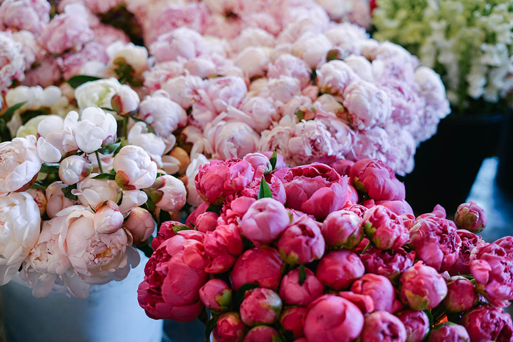 Peonies Bunches